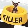 Акция портала Dogandcat! - последнее сообщение от sasha30