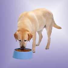 Как правильно и чем кормить собак