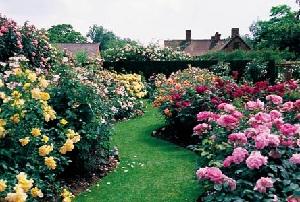 Видовое разнообразие и сорта роз